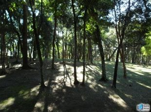 - Bosque Boa Vista
